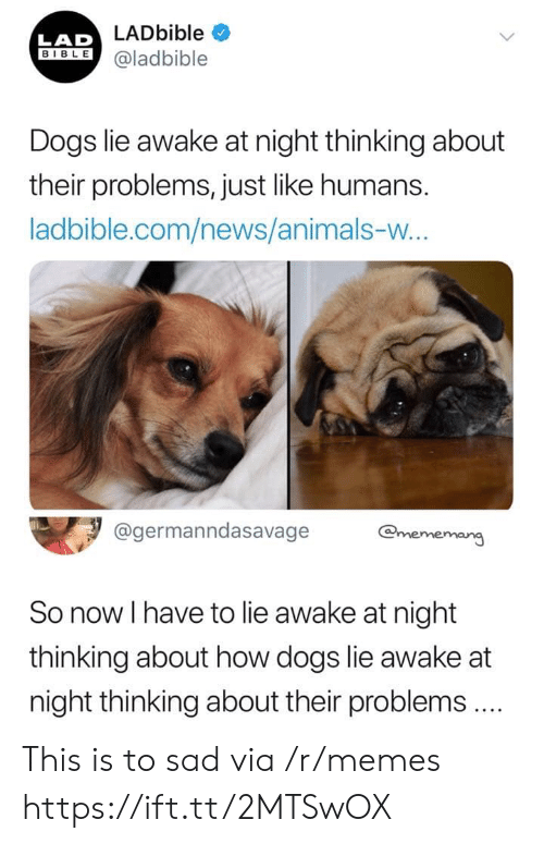 Animals, Dogs, and Memes: LADbible  LAD  BIBLE@ladbible  Dogs lie awake at night thinking about  their problems, just like humans.  ladbible.com/news/animals-w...  @germanndasavage  @mememang  So now I have to lie awake at night  thinking about how dogs lie awake at  night thinking about their problems.  > This is to sad via /r/memes https://ift.tt/2MTSwOX