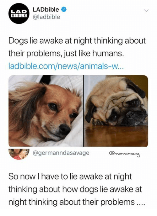 Animals, Dogs, and News: LADbible  LAD  SIOLE@ladbible  Dogs lie awake at night thinking about  their problems, just like humans.  ladbible.com/news/animals-w  @germanndasavage ememang  So now I have to lie awake at night  thinking about how dogs lie awake at  night thinking about their problems ..