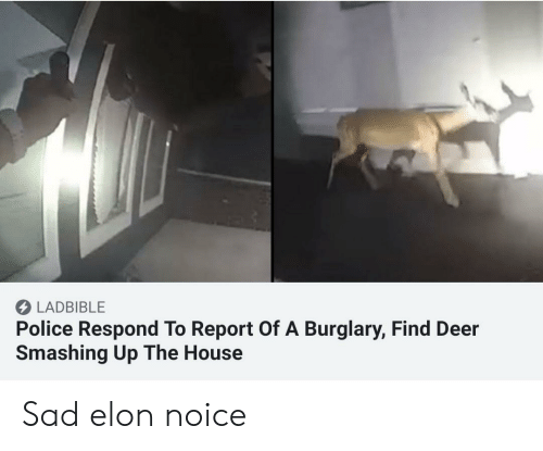 LADBIBLE Police Respond to Report of a Burglary Find Deer Smashing