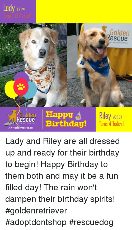 Birthday, Memes, and Happy Birthday: Lady #21  94  Golden  escue  Rescue Birthday!  ppy  Riley #2552  Turns 4 Today!  rescue. са Lady and Riley are all dressed up and ready for their birthday to begin! Happy Birthday to them both and may it be a fun filled day! The rain won't dampen their birthday spirits!  #goldenretriever #adoptdontshop #rescuedog