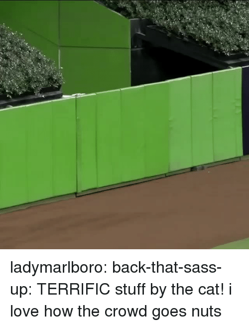 Love, Tumblr, and Blog: ladymarlboro: back-that-sass-up: TERRIFIC stuff by the cat! i love how the crowd goes nuts