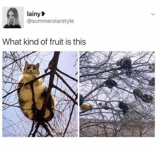Aww Memes: lainy  @summerstarstyle  What kind of fruit is this