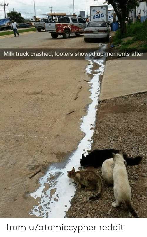 Dank, Reddit, and 🤖: LALA  LA  Milk truck crashed, looters showed up moments after from u/atomiccypher reddit