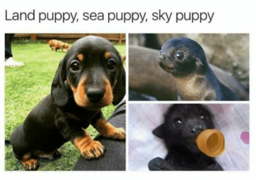 Puppy, Sky, and  Sea: Land puppy, sea puppy, sky puppy