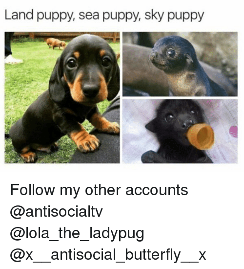 Memes, Butterfly, and Puppy: Land puppy, sea puppy, sky puppy Follow my other accounts @antisocialtv @lola_the_ladypug @x__antisocial_butterfly__x