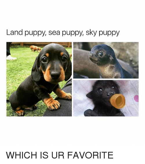 Puppy, Girl Memes, and Sky: Land puppy, sea puppy, sky puppy WHICH IS UR FAVORITE