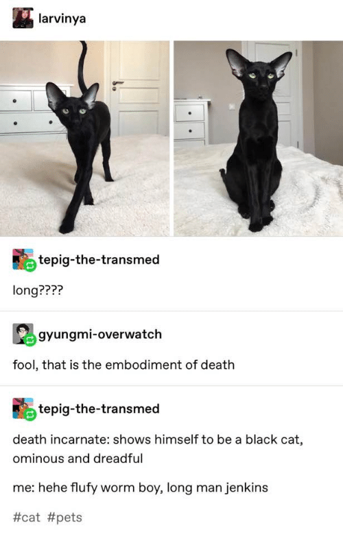 black cat: larvinya  tepig-the-transmed  long????  gyungmi-overwatch  fool, that is the embodiment of death  tepig-the-transmed  death incarnate: shows himself to be a black cat,  ominous and dreadful  me: hehe flufy worm boy, long man jenkins
