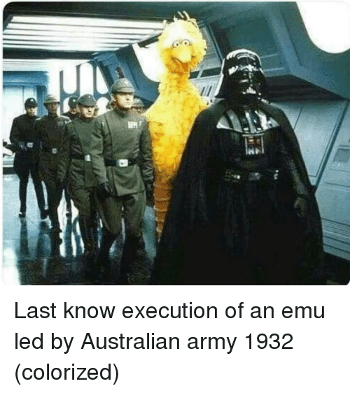 Army, Australian, and Led: Last know execution of an emu led by Australian army 1932 (colorized)