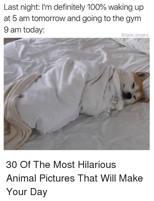 5 Am, Anaconda, and Definitely: Last night: I'm definitely 100% waking up  at 5 am tomorrow and going to the gym  9 am today:  @tank.sinatra 30 Of The Most Hilarious Animal Pictures That Will Make Your Day