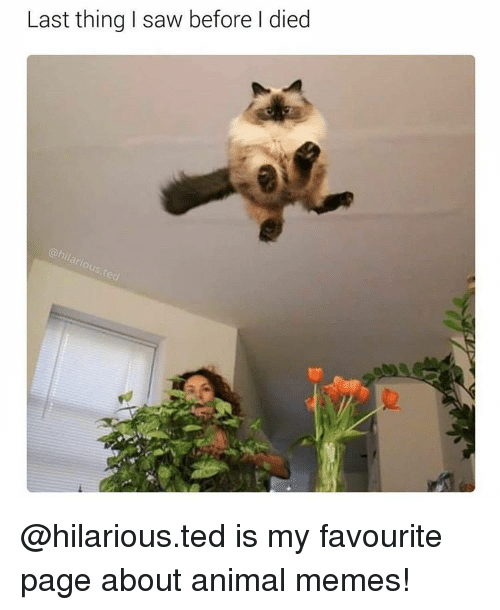 Animals Meme: Last thing I saw before died @hilarious.ted is my favourite page about animal memes!