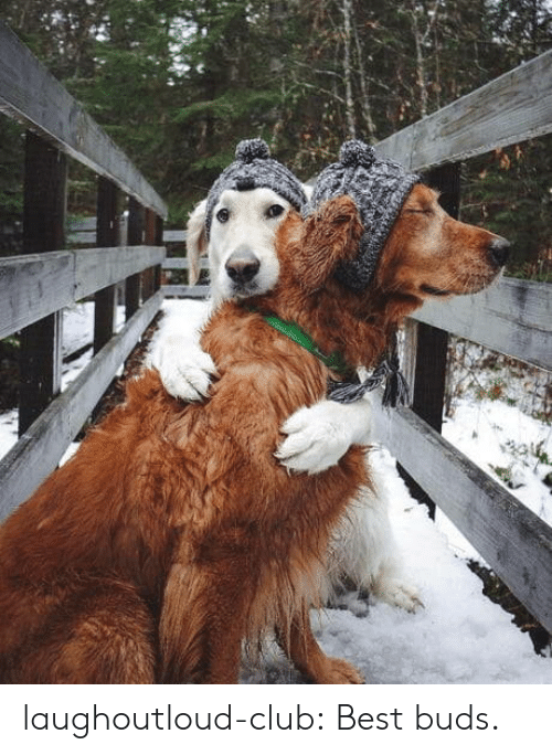 Club, Tumblr, and Best: laughoutloud-club:  Best buds.