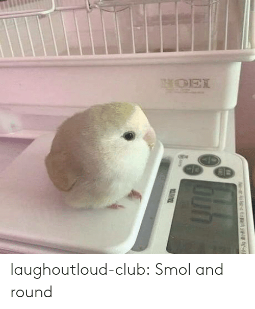 Round: laughoutloud-club:  Smol and round