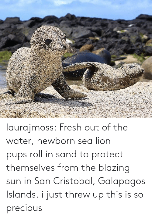 Blazing: laurajmoss:  Fresh out of the water, newborn sea lion pupsroll in sand to protect themselves from the blazing sun in San Cristobal, Galapagos Islands.  i just threw up this is so precious