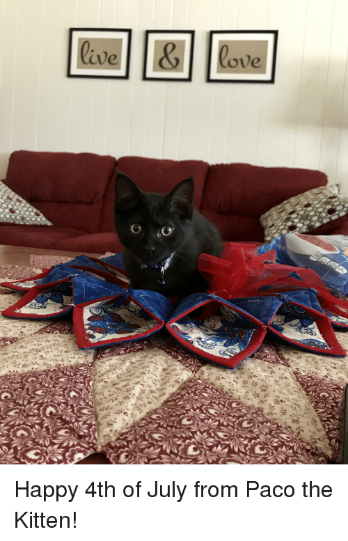 4th of July, Happy, and Kitten: lave  ove  0, Happy 4th of July from Paco the Kitten!