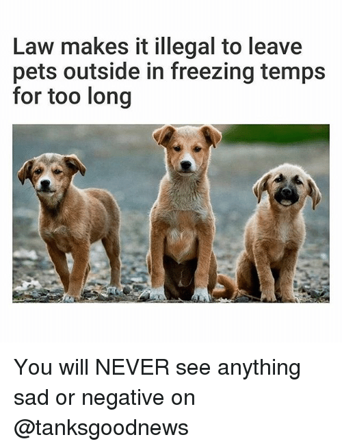 Funny, Pets, and Sad: Law makes it illegal to leave  pets outside in freezing temps  for too long You will NEVER see anything sad or negative on @tanksgoodnews