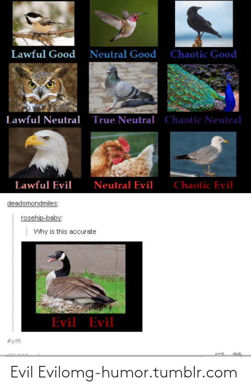 Good Neutral: Lawful Good  Neutral Good  Chaotic Good  Chaotic Neutral  Lawful Neutral  True Neutral  Lawful Evil  Neutral Evil  Chaotic Evil  deadsmondmiles:  rosehip-baby:  Why is this accurate  Evil Evil  Evil Evilomg-humor.tumblr.com