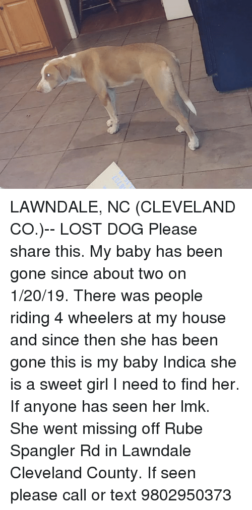 Memes, My House, and Lost: LAWNDALE, NC (CLEVELAND CO.)-- LOST DOG  Please share this. My baby has been gone since about two on 1/20/19. There was people riding 4 wheelers at my house and since then she has been gone this is my baby Indica she is a sweet girl I need to find her. If anyone has seen her lmk. She went missing off Rube Spangler Rd in Lawndale Cleveland County. If seen please call or text 9802950373