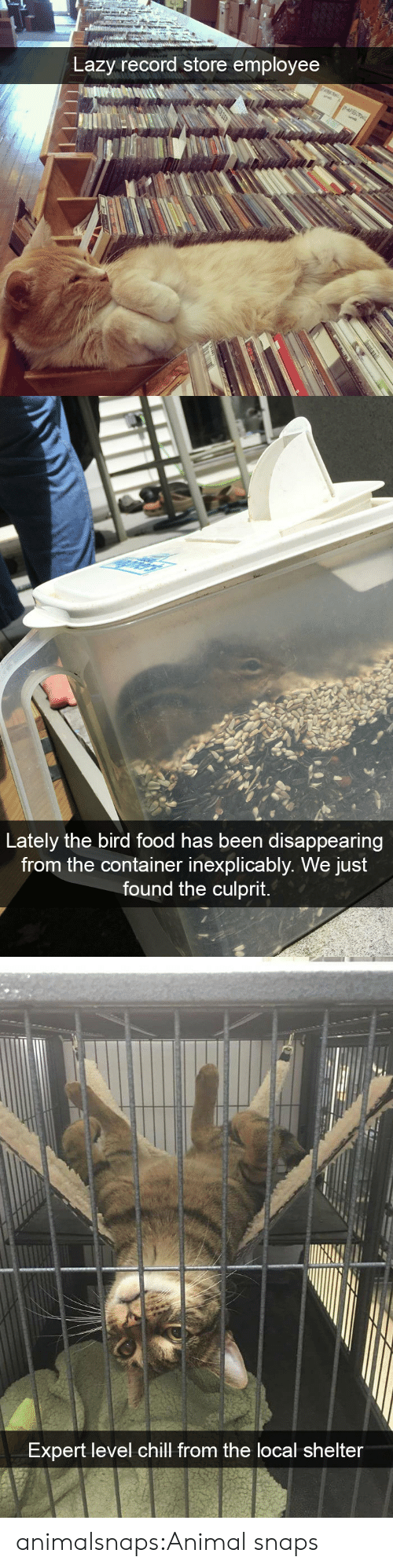 container: Lazy record store employee   Lately the bird food has been disappearing  from the container inexplicably. We just  found the culprit.   Expert level chill from the local shelter animalsnaps:Animal snaps