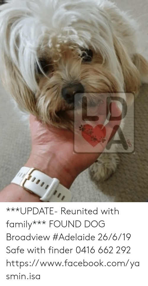 Facebook, Family, and Memes: LD  A  ANC ***UPDATE- Reunited with family***  FOUND DOG Broadview #Adelaide 26/6/19 Safe with finder 0416 662 292 https://www.facebook.com/yasmin.isa