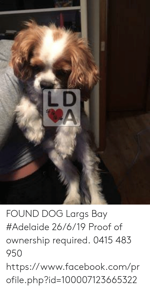 Facebook, Memes, and facebook.com: LD  CA FOUND DOG Largs Bay #Adelaide 26/6/19 Proof of ownership required. 0415 483 950 https://www.facebook.com/profile.php?id=100007123665322