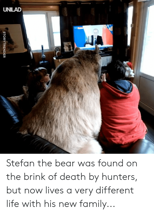 Dank, Family, and Life: ld  CS  STORYTRENDER Stefan the bear was found on the brink of death by hunters, but now lives a very different life with his new family...