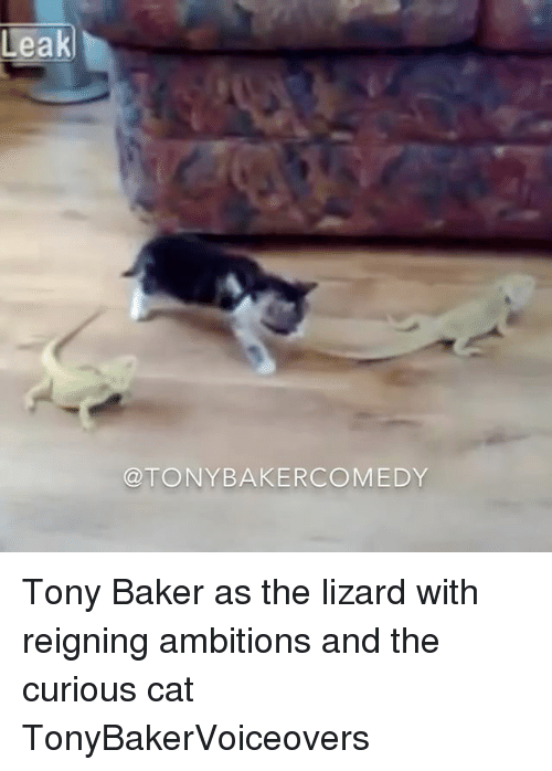 curious cat: Leak  TONY BAKERCOMEDY Tony Baker as the lizard with reigning ambitions and the curious cat TonyBakerVoiceovers