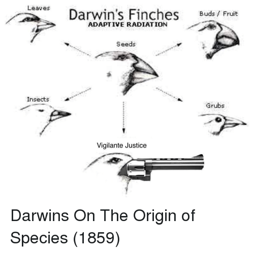 Vigilante: Leaves  Darwin's Finches Buds/ Fruit  ADAPTIVE RADIATION  Seeds  Insects  Grubs  Vigilante Justice Darwins On The Origin of Species (1859)