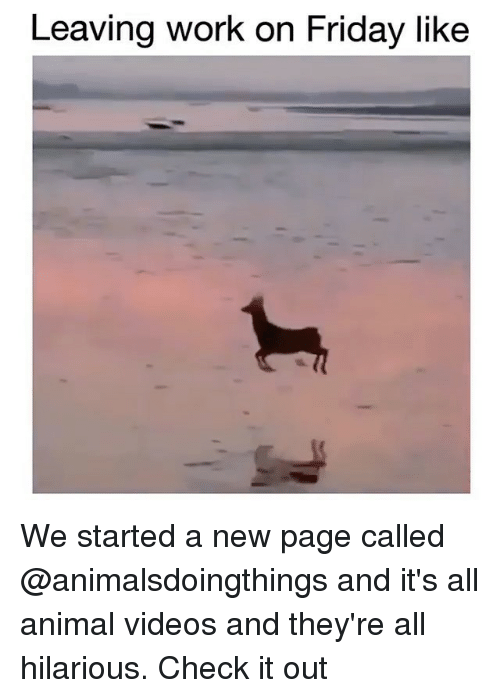 Animal Videos: Leaving work on Friday like We started a new page called @animalsdoingthings and it's all animal videos and they're all hilarious. Check it out