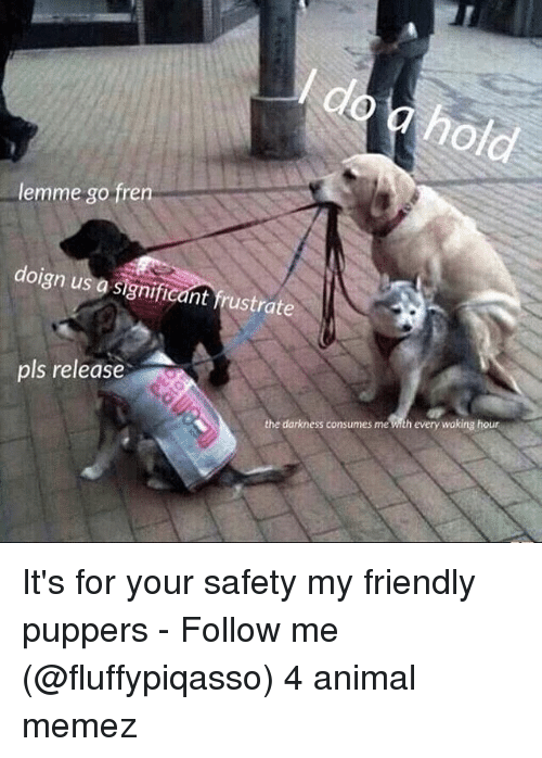 Memes, Animal, and 🤖: lemme go fren  doign us a significant frustrate  pls release  the darkness consumes me  every waking hour It's for your safety my friendly puppers - Follow me (@fluffypiqasso) 4 animal memez