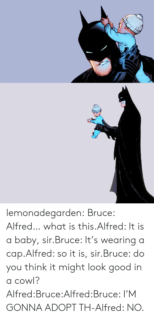 what is this: lemonadegarden:  Bruce: Alfred… what is this.Alfred: It is a baby, sir.Bruce: It's wearing a cap.Alfred: so it is, sir.Bruce: do you think it might look good in a cowl?Alfred:Bruce:Alfred:Bruce: I'M GONNA ADOPT TH-Alfred: NO.