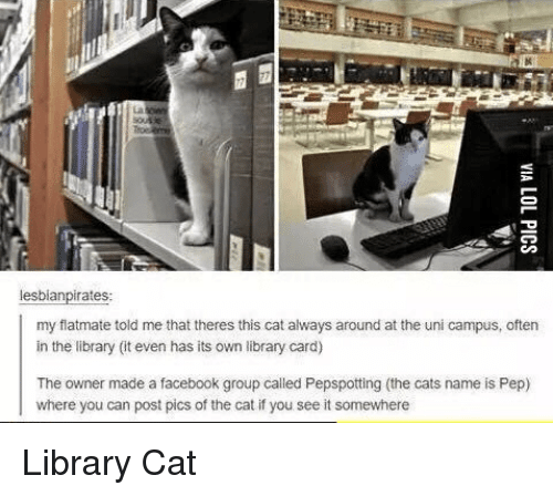 Cats, Facebook, and Library: lesblanpirates:  my flatmate told me that theres this cat always around at the uni campus, oftern  in the library it even has its own library card)  The owner made a facebook group called Pepspotting (the cats name is Pep)  where you can post pics of the cat if you see it somewhere Library Cat
