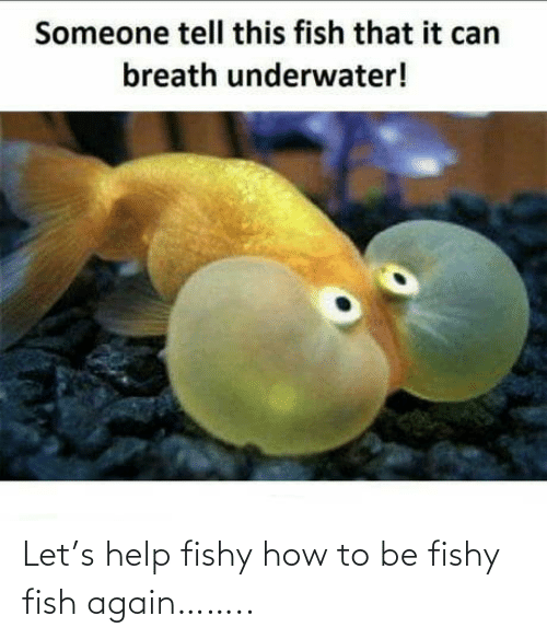 Fish: Let's help fishy how to be fishy fish again……..