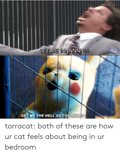 Target, Tumblr, and Adult Swim: LET ME INN  NNNN!!  adult swim)   GET ME THE HELL OUT OF HERE! torracat: both of these are how ur cat feels about being in ur bedroom