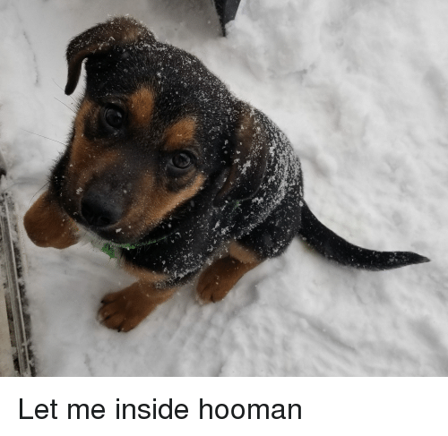 Inside, Let Me, and Let-Me-Inside: Let me inside hooman