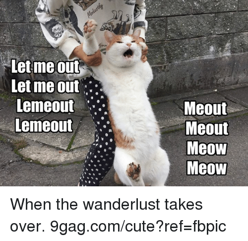 9gag, Cute, and Dank: let meout  Let me out  Lemeout  Lemeout  Meout  Meout  Meow  Meow When the wanderlust takes over. 9gag.com/cute?ref=fbpic