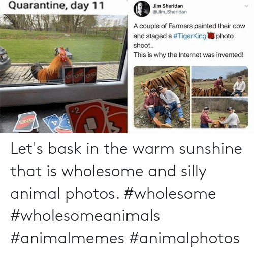 silly: Let's bask in the warm sunshine that is wholesome and silly animal photos. #wholesome #wholesomeanimals #animalmemes #animalphotos