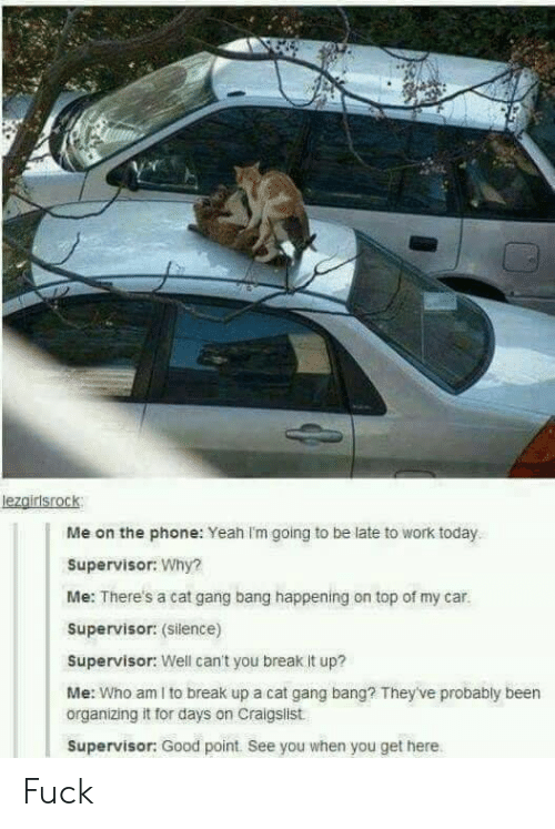 Organizing: lezgirisrock  Me on the phone: Yeah Im going to be late to work today  Supervisor: Why?  Me: There's a cat gang bang happening on top of my car.  Supervisor: (Silence)  Supervisor: Well can't you break it up?  Me: Who am I to break up a cat gang bang? They've probably been  organizing it for days on Craigslist  Supervisor: Good point. See you when you get here Fuck