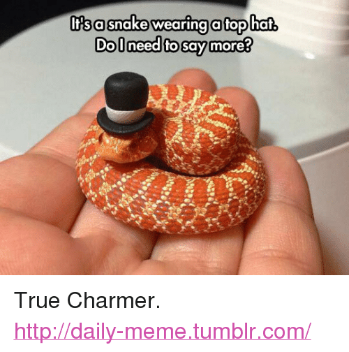 "Say More: lfsasnake wearing a tophaf,  Dolneed fo say more? <p>True Charmer.<br/><a href=""http://daily-meme.tumblr.com""><span style=""color: #0000cd;""><a href=""http://daily-meme.tumblr.com/"">http://daily-meme.tumblr.com/</a></span></a></p>"