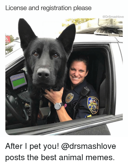 Memes, Animal, and Best: License and registration please  @DrSmashlove After I pet you! @drsmashlove posts the best animal memes.
