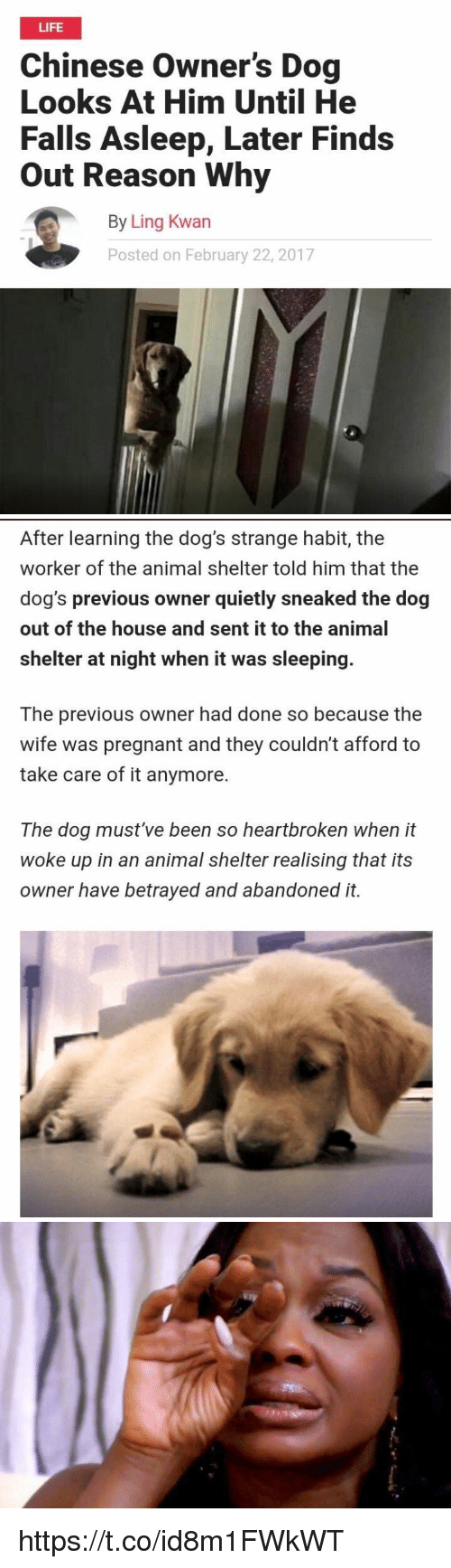 Dogs, Life, and Pregnant: LIFE  Chinese Owner's Dog  Looks At Him Until He  Falls Asleep, Later Finds  Out Reason Why  By Ling Kwan  Posted on February 22, 2017   After learning the dog's strange habit, the  worker of the animal shelter told him that the  dog's previous owner quietly sneaked the dog  out of the house and sent it to the animal  shelter at night when it was sleeping.  The previous owner had done so because the  wife was pregnant and they couldn't afford to  take care of it anymore.  The dog must've been so heartbroken when it  woke up in an animal shelter realising that its  owner have betrayed and abandoned it. https://t.co/id8m1FWkWT