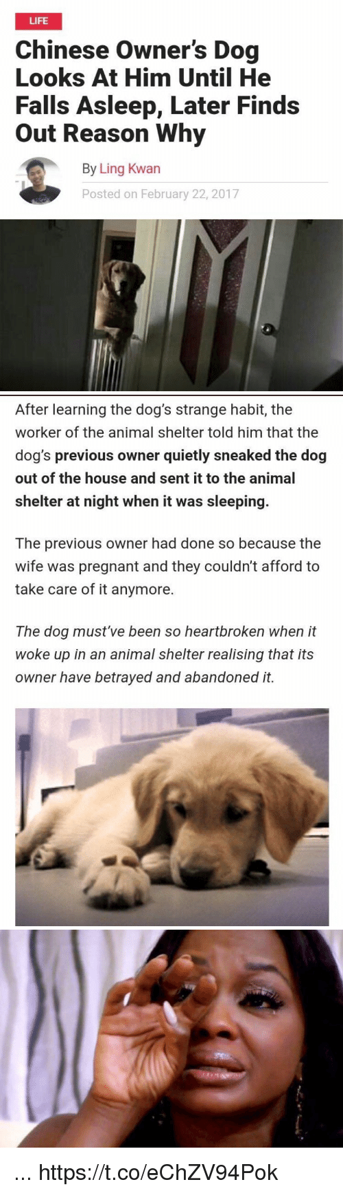 Dogs, Funny, and Life: LIFE  Chinese Owner's Dog  Looks At Him Until He  Falls Asleep, Later Finds  Out Reason Why  By Ling Kwan  Posted on February 22, 2017   After learning the dog's strange habit, the  worker of the animal shelter told him that the  dog's previous owner quietly sneaked the dog  out of the house and sent it to the animal  shelter at night when it was sleeping.  The previous owner had done so because the  wife was pregnant and they couldn't afford to  take care of it anymore.  The dog must've been so heartbroken when it  woke up in an animal shelter realising that its  owner have betrayed and abandoned it. ... https://t.co/eChZV94Pok
