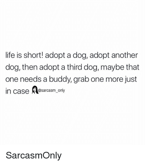 Funny, Life, and Memes: life is short! adopt a dog, adopt another  dog, then adopt a third dog, maybe that  one needs a buddy, grab one more just  @sarcasm on SarcasmOnly