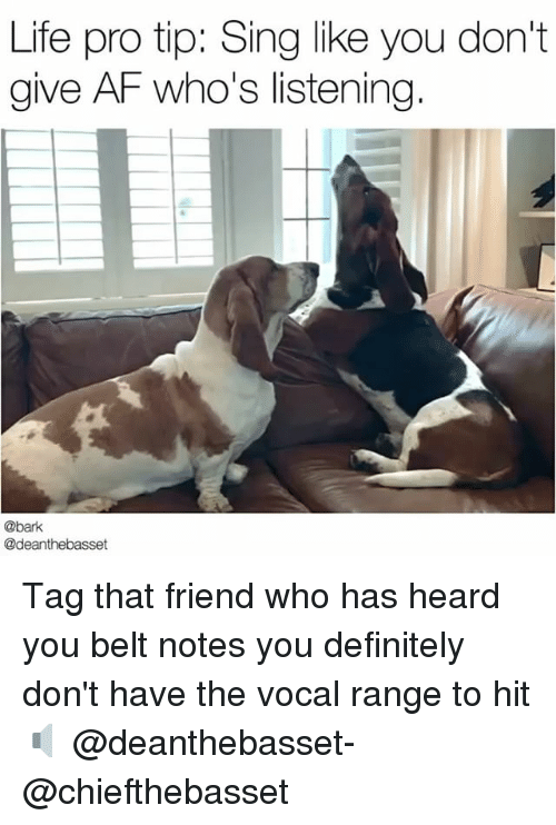 singe: Life pro tip: Sing like you don't  give AF who's listening  @bark  @deanthebasset Tag that friend who has heard you belt notes you definitely don't have the vocal range to hit 🔈 @deanthebasset- @chiefthebasset