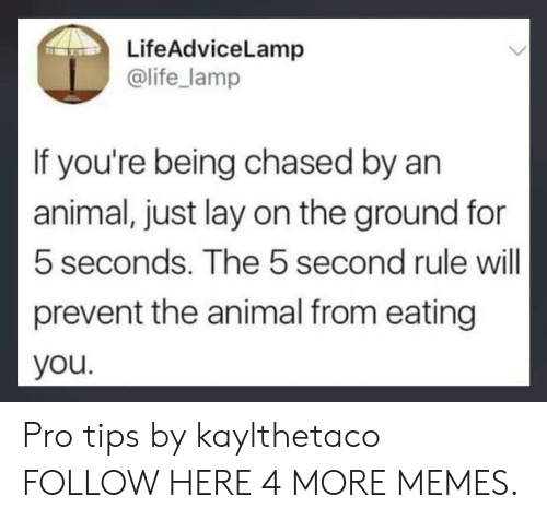 Being Chased: LifeAdviceLamp  @life_lamp  If you're being chased by an  animal, just lay on the ground for  5 seconds. The 5 second rule will  prevent the animal from eating  you Pro tips by kaylthetaco FOLLOW HERE 4 MORE MEMES.