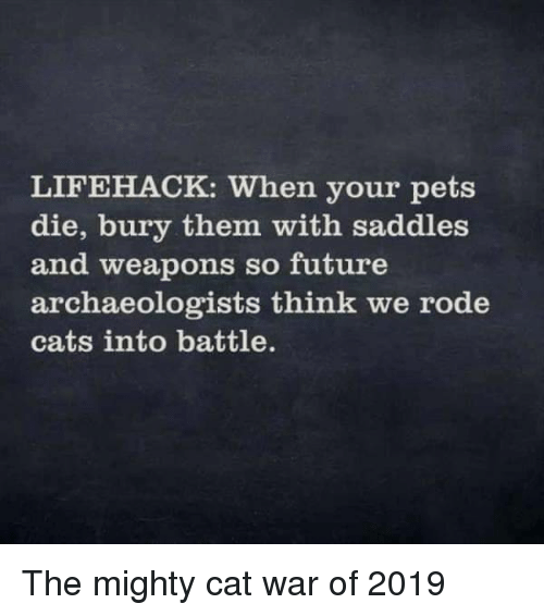 saddles: LIFEHACK: When your pets  die, bury them with saddles  and weapons so future  archaeologists think we rode  cats into battle. The mighty cat war of 2019