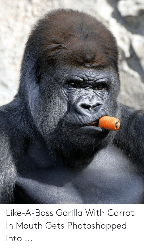 Gorilla Memes: Like-A-Boss Gorilla With Carrot In Mouth Gets Photoshopped Into ...