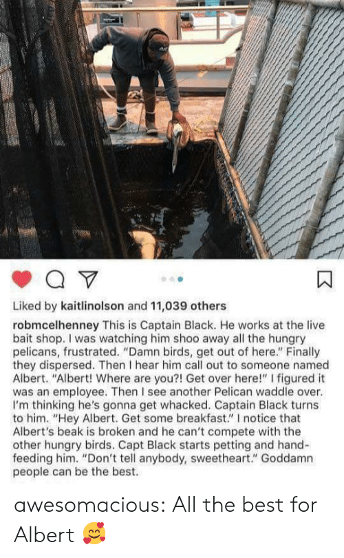 "get-out-of-here: Liked by kaitlinolson and 11,039 others  robmcelhenney This is Captain Black. He works at the live  bait shop. I was watching him shoo away all the hungry  pelicans, frustrated. ""Damn birds, get out of here."" Finally  they dispersed. Then I hear him call out to someone named  Albert. ""Albert! Where are you?! Get over here!"" I figured it  was an employee. Then I see another Pelican waddle over.  I'm thinking he's gonna get whacked. Captain Black turns  to him. ""Hey Albert. Get some breakfast."" I notice that  Albert's beak is broken and he can't compete with the  other hungry birds. Capt Black starts petting and hand-  feeding him. ""Don't tell anybody, sweetheart."" Goddamn  people can be the best. awesomacious:  All the best for Albert 🥰"