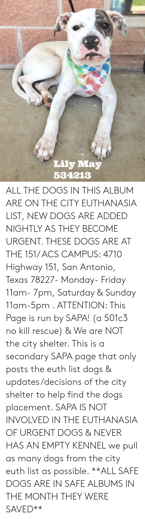 Dogs, Friday, and Memes: Lily May  534213 ALL THE DOGS IN THIS ALBUM ARE ON THE CITY EUTHANASIA LIST, NEW DOGS ARE ADDED NIGHTLY AS THEY BECOME URGENT. THESE DOGS ARE AT THE 151/ ACS CAMPUS: 4710 Highway 151, San Antonio, Texas 78227- Monday- Friday 11am- 7pm, Saturday & Sunday 11am-5pm . ATTENTION: This Page is run by SAPA! (a 501c3 no kill rescue) & We are NOT the city shelter. This is a secondary SAPA page that only posts the euth list dogs & updates/decisions of the city shelter to help find the dogs placement. SAPA IS NOT INVOLVED IN THE EUTHANASIA OF URGENT DOGS &  NEVER HAS AN EMPTY KENNEL we pull as many dogs from the city euth list as possible. **ALL SAFE DOGS ARE IN SAFE ALBUMS IN THE MONTH THEY WERE SAVED**