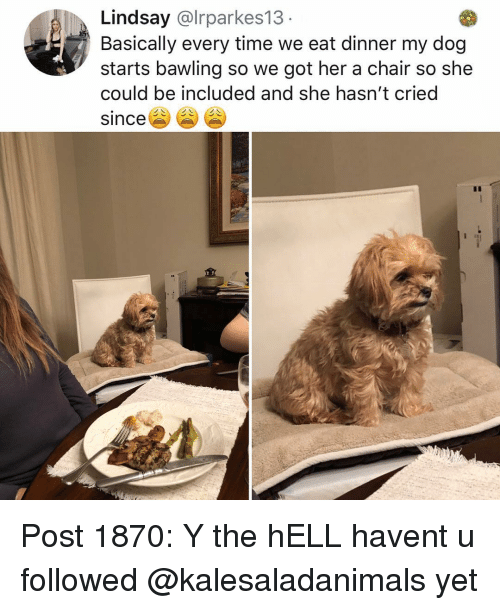 Memes, Time, and Chair: Lindsay @lrparkes13  Basically every time we eat dinner my dog  starts bawling so we got her a chair so she  could be included and she hasn't cried  since Post 1870: Y the hELL havent u followed @kalesaladanimals yet