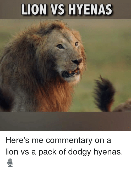 Memes, Lion, and 🤖: LION VS HYENAS Here's me commentary on a lion vs a pack of dodgy hyenas.🎙